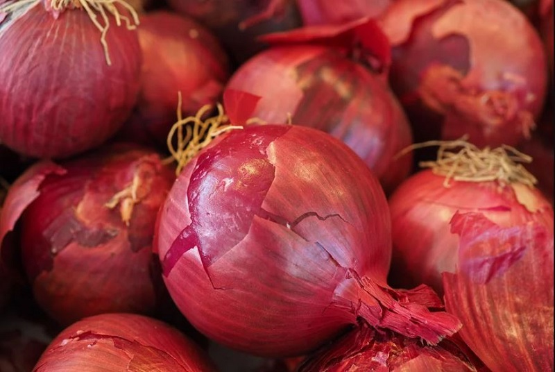 onion #paperslife